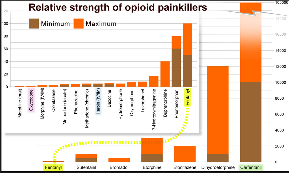 relative strength of opioids from oral morphine to carafentanil